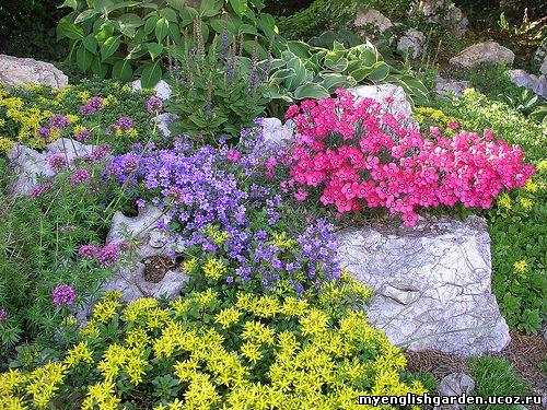 защита цветка от кошки фото